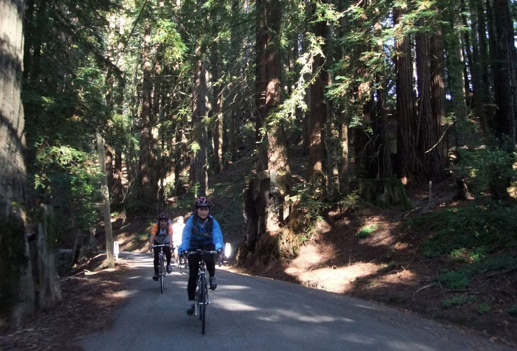 The SF group riding through the trees on west-side Old LaHonda
