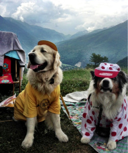 tour_dogs