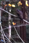 Fuzzy picture of a beautiful bird